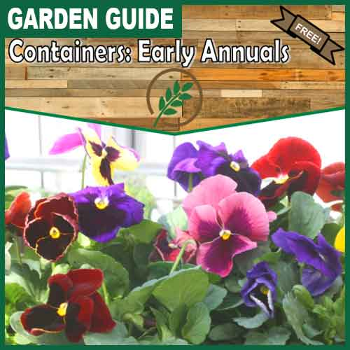 500x500 containers-early-annuals
