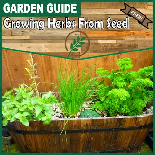 500x500 growing-herbs-from-seeds