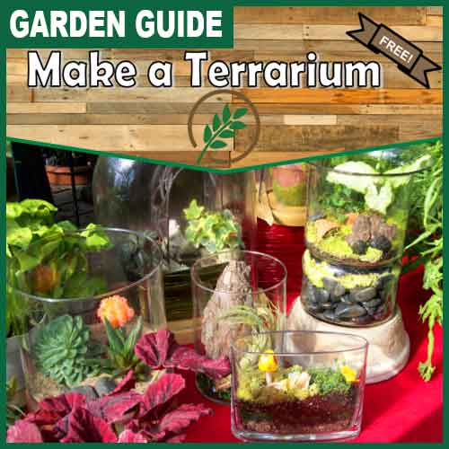 500x500 make-a-terrarium