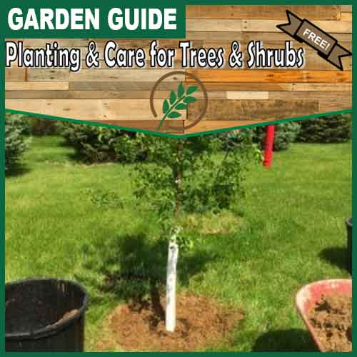 500x500 planting-and-care-for-trees-and-shrubs
